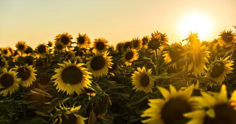 protectores solares naturales y zero waste