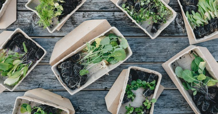 biodegradable vs compostable
