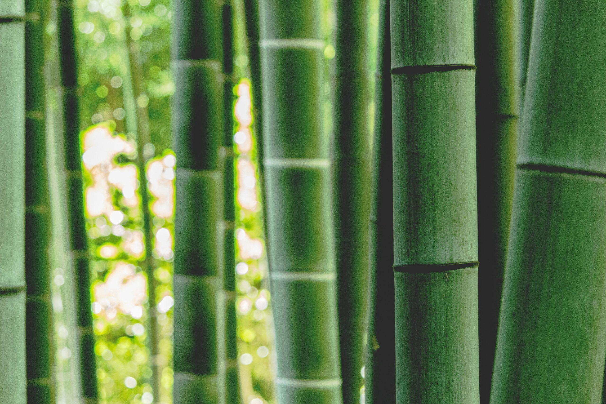 bambú material sostenible